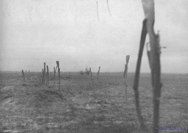 брошенные винтовки мосина 1941 год